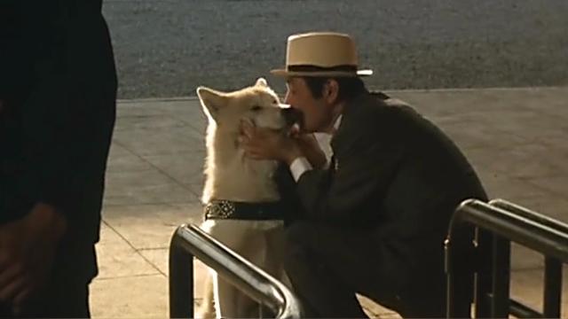 日本有秋田犬,中国有田园犬,抛弃观念它们不分伯仲