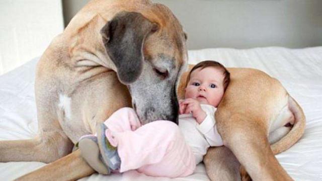 暖心!狗狗与Baby的温馨时刻!