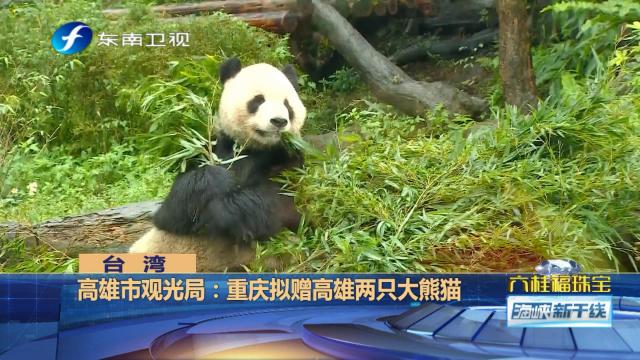 """重庆拟赠高雄两只大熊猫,韩国瑜希望取名""""发大财""""、""""赚大钱"""""""