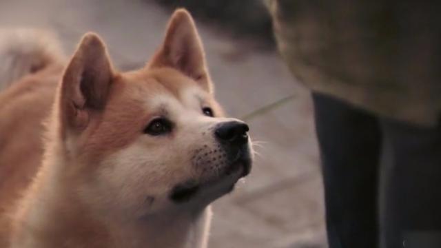 在日本养狗居然有这么多条例和约束 真是长见识了!