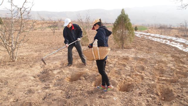 甘肃地区农村人开始种土豆,甘肃种的土豆是最好吃的