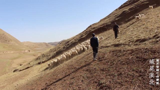 甘肃古浪移民山区父子俩跑去买羊为啥使劲摇头,跑弯了腿才看到羊