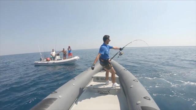 钓鱼人海钓中金枪鱼,这么大的鱼直接放生,为钓不为鱼