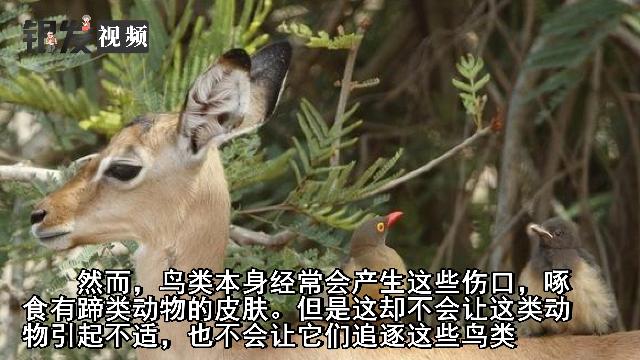 在动物世界,这些冷知识太有趣了