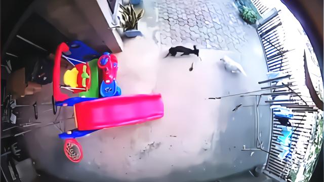 忠犬为护1岁女婴与毒蛇搏斗 2分钟后蛇倒地小狗结局令人心碎