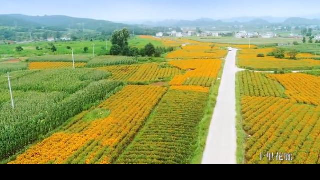 看见美丽中国 |美丽乡村 生态菱角