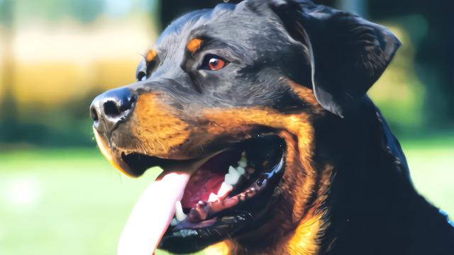 3条大型犬咬死电工,目击者:死者满身伤口,满地有血的狗脚印