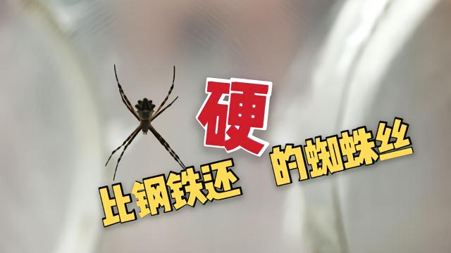 现实版蜘蛛侠!科学家提纯蜘蛛丝 竟是比钢铁还坚硬的存在?