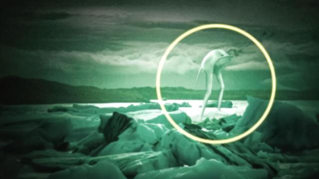 南极再次发现Ningen巨兽,到底是未知生物还是人为制造的?