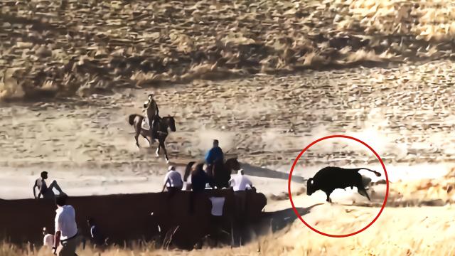 实拍:西班牙奔牛活动 男子遭发狂公牛活活顶死