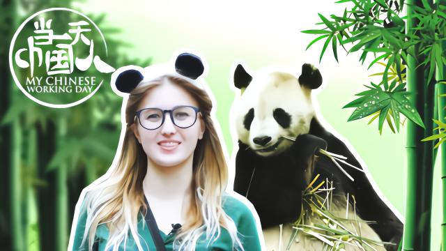 视见 | 俄罗斯女孩体验熊猫铲屎官