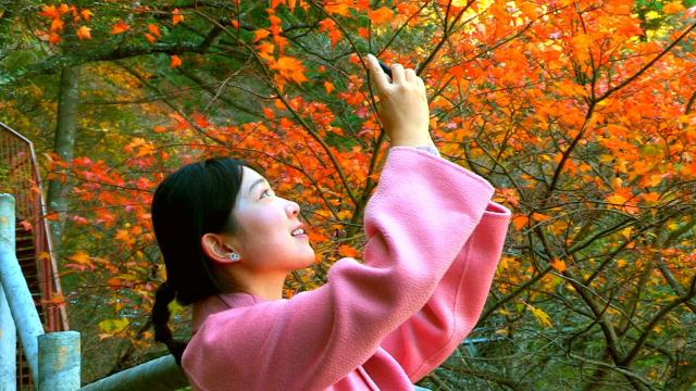 平顶山市金秋旅游产品发布会暨第九届醉美尧山红叶节开幕式
