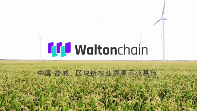 中国盐城,全球最大的区块链技术大米生产基地
