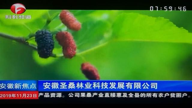 安徽科教频道《安徽新焦点》报道—安徽圣桑林业科技发展有限公司