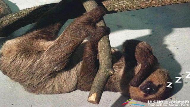 解密动物园保暖奥秘