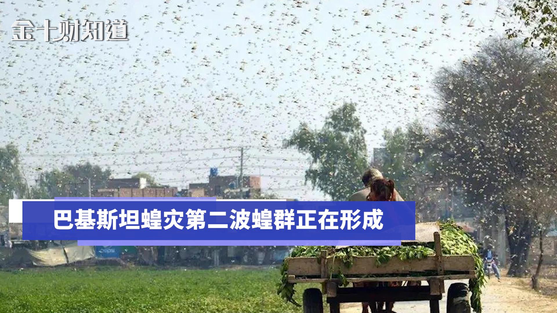 巴基斯坦蝗灾第二波蝗群正在形成,中国援助的药物与药械派上用场