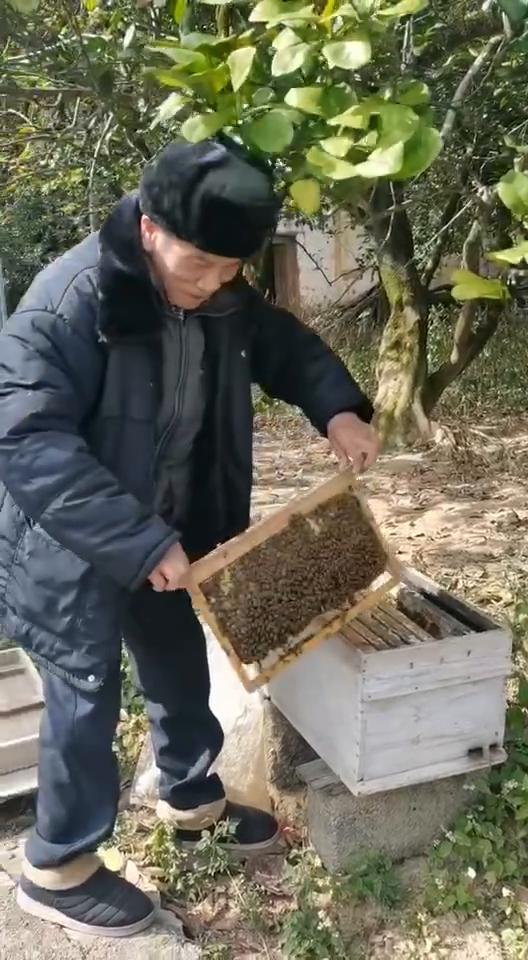 遇山芗舍:阳朔蜂蜜之爷爷的蜂蜜,爷爷养了十多年的天然蜂蜜,