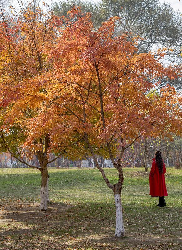 吉林市江滨公园色彩缤纷美景如画图片