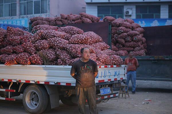 个别产区大蒜价格跌至十年最低 部分农民放弃采收