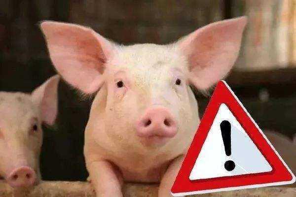 农业农村部:切实加强非洲猪瘟防治新兽药研制活动监管