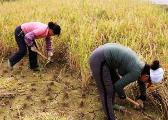 理解农民:历史转折期中国农民的一些典型性事实