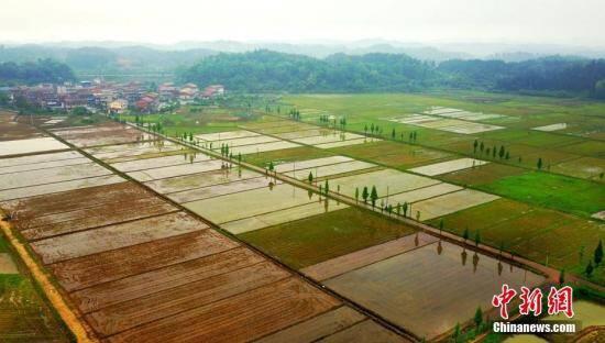 农业农村部:农村承包地确权工作进入收尾阶段(图)