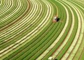 蔡昉:应继续减少农业人口