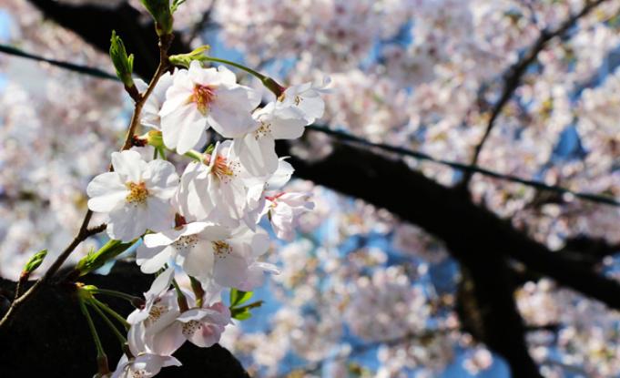 外国游客数量近6年首降!日本旅游业拉响警报