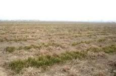 税费改革后 农村地区为何仍存在土地撂荒现象