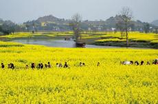 张强:乡村如何从衰落走向复兴
