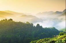 发生了什么让中国的森林覆盖率得到大幅提升?