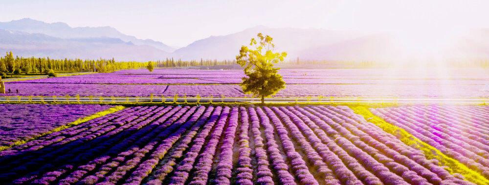 国内10处如同上帝打翻调色盘般的盛夏美景 绽放的极致色彩
