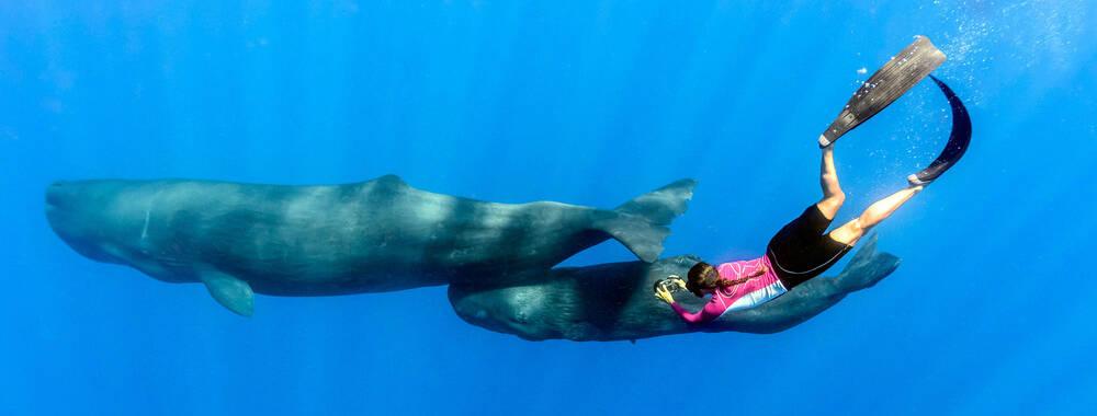 中国和多米尼加建交 探秘加勒比海这片生态旅游的天堂
