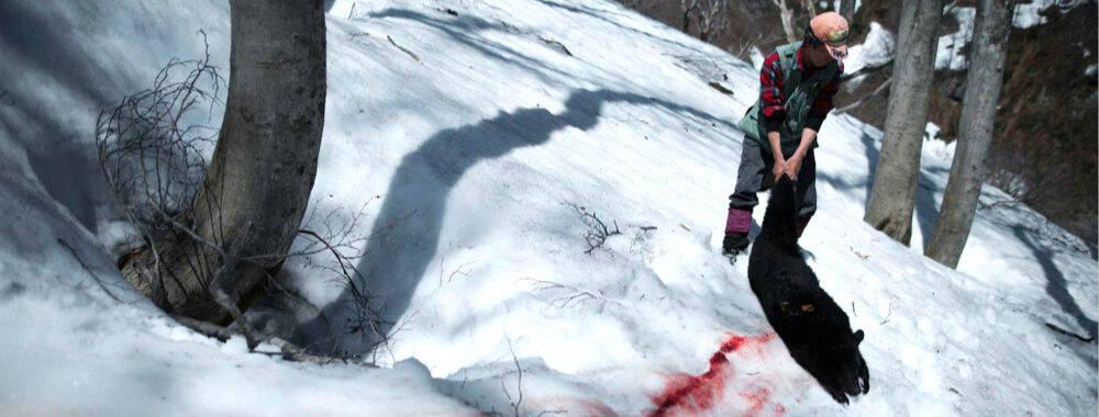 藏在深山的日本狩猎者:为了生存与繁衍 必须持续捕猎濒危黑熊? | 大师 IN 像