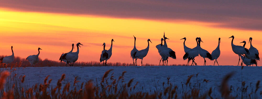 国家旅游局推出首批10家湿地公园 周末不愁去哪啦!