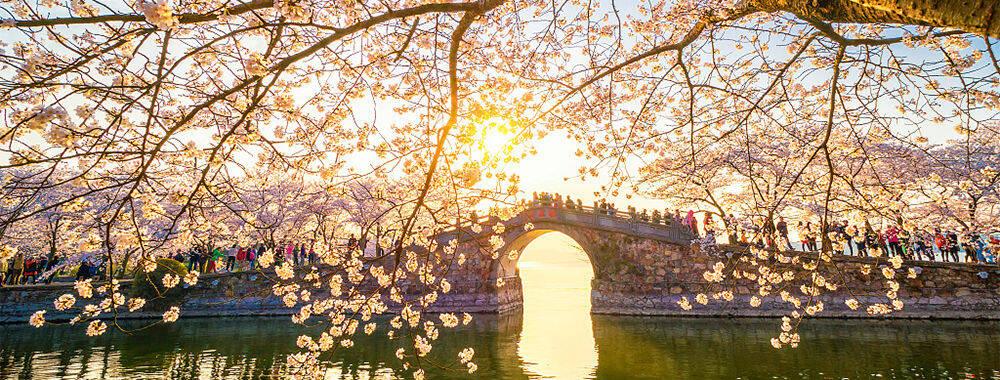 盘点国内外15处赏樱胜地 最美的居然藏在中国这里