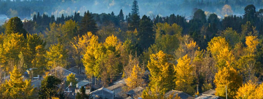 假期結束秋景卻持續在線 中國10個最美銀杏觀賞地就在你家門口