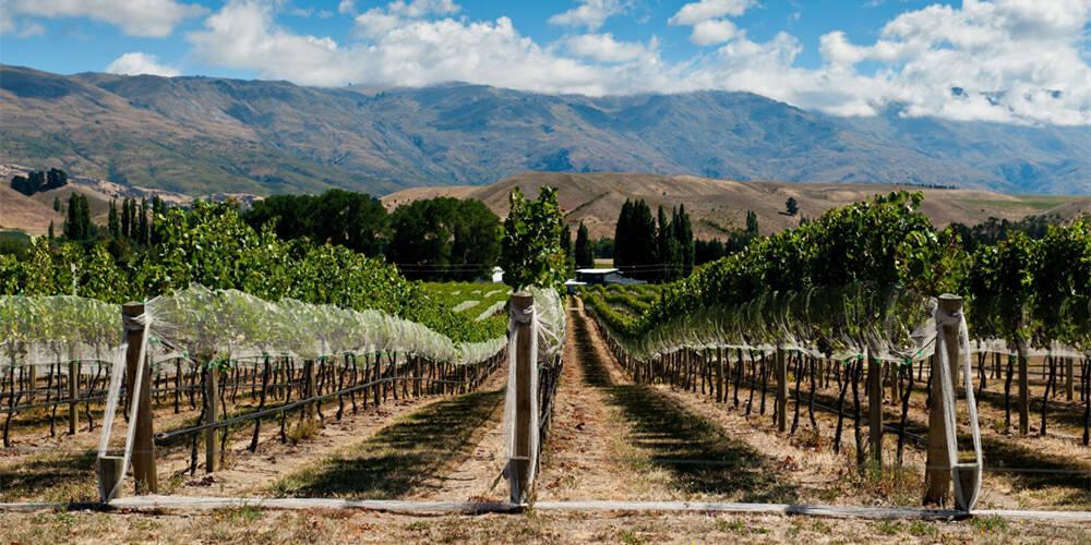新西兰的红酒