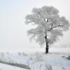 冬日里的温暖声音