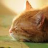 关注睡眠,健康生活