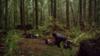 女孩森林迷路遭陌生黑人强奸,场面残忍令人发指