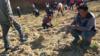 """千人在弃土场组团连夜挖""""玉石"""""""