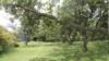 武汉一别墅主人砍伐自家院内树木被罚1.3万