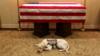老布什去世 生前服务犬守灵柩前不离去