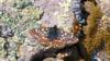 时隔半个世纪 一稀有蝴蝶在土耳其再次被发现