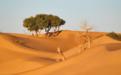 """参与""""我有一片胡杨林""""公益项目,为甘肃种下""""沙漠英雄树"""""""