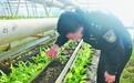漠河边检站寒地温室大棚首批蔬果丰收