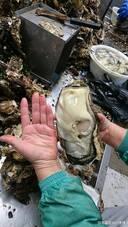 日本 马里奥/1月8日,网上忽然出现了一张被与2011年福岛核电站事故联系起来...