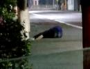 男子醉卧路边 公交司机为他披衣找家