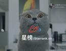 连接广告主与短视频网红,星榜致力于做一站式的网红营销服务平台